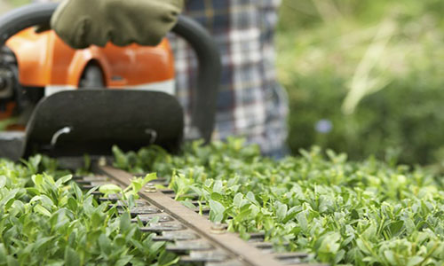 Sfalcio siepi verona pulizia giardini privati e for Giardinieri verona